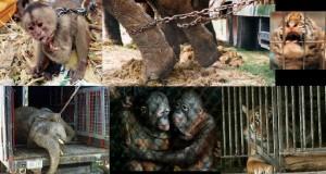 Parcial defensa de animales en el DF
