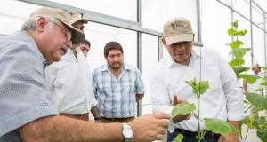Gobernador visita invernadero Maya Vegetales del grupo La Anita